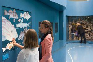 Eine Museumsreise