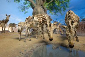 Eine Safari durch afrikanische Savannen und Wüsten